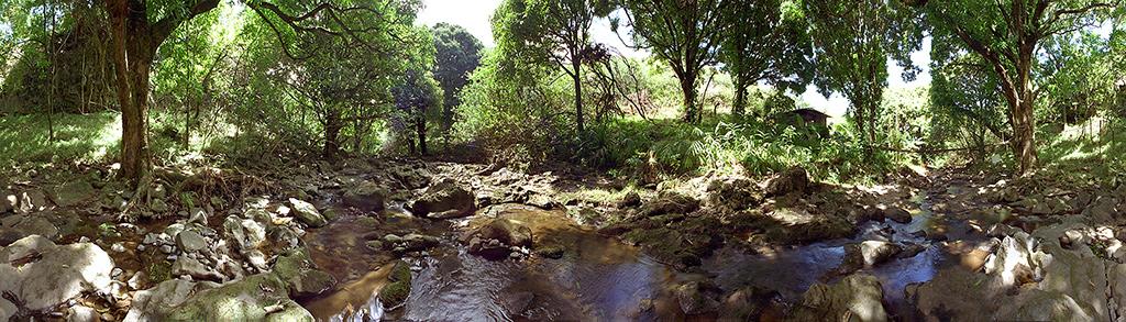 Maui Home
