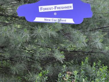 Forest-Freshner New Car Scent